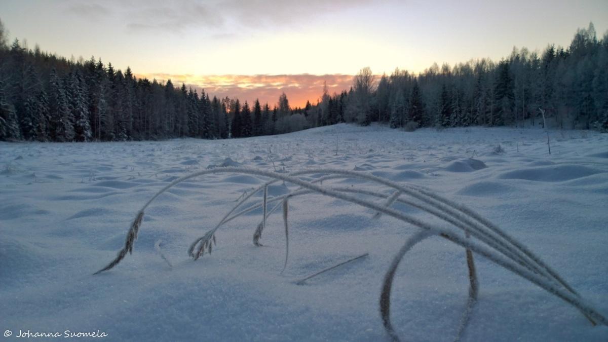 Jaatynyt heina auringonlasku metsapelto