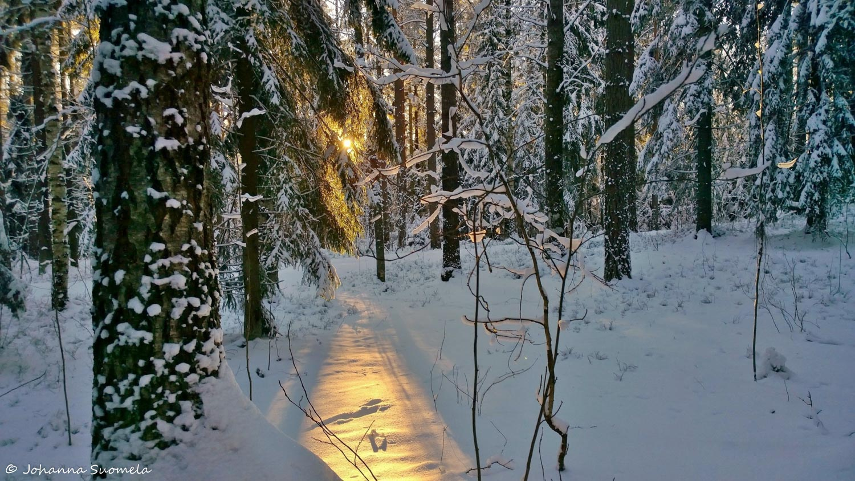 Joulupaiva auringonsade