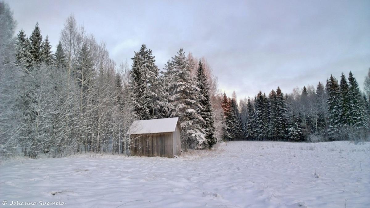 Lato metsapelto talvi