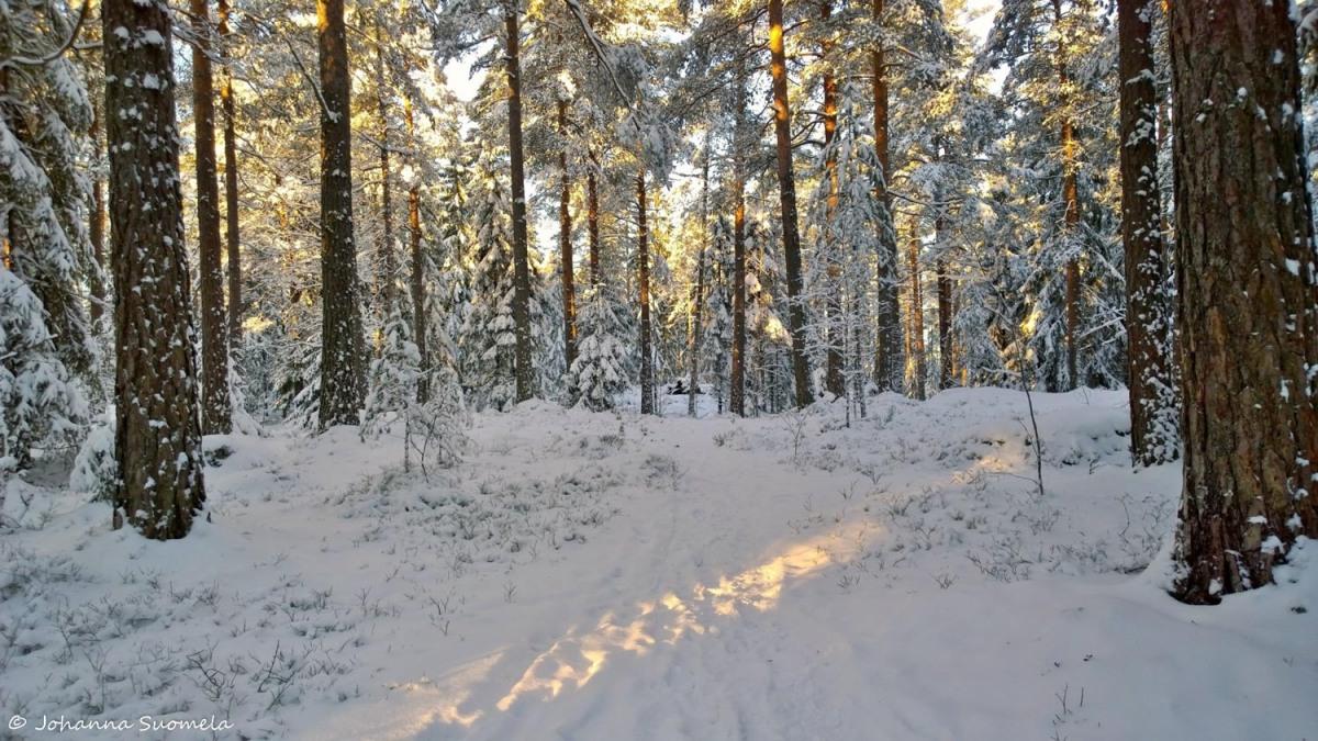 Joulupaiva Metsapolku Lumipuut