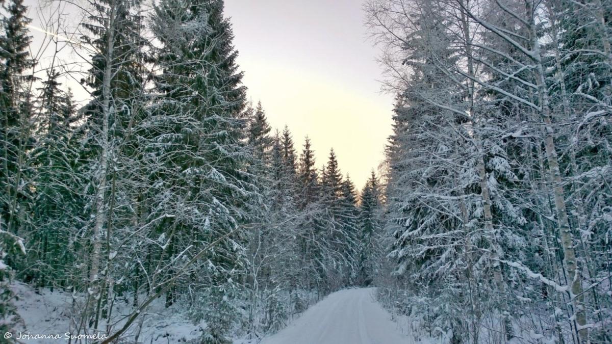 Metsatie talvimetsa