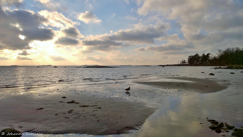 Sorsa hiekkasarkka meri