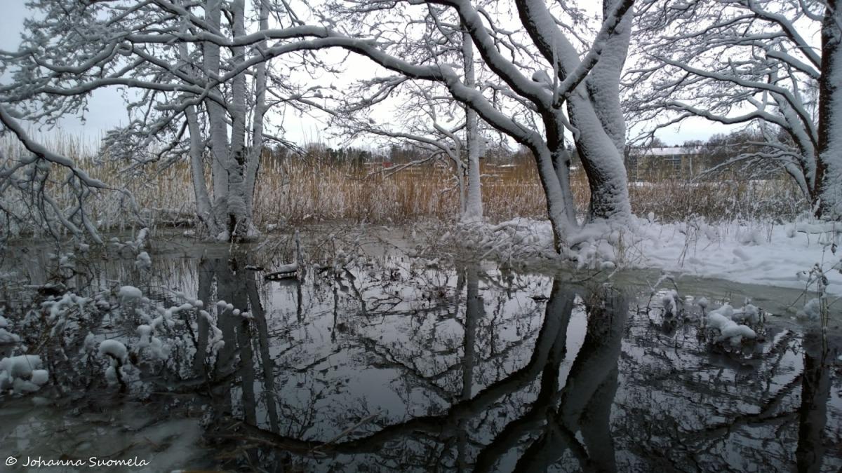 Heijastus lumipuut