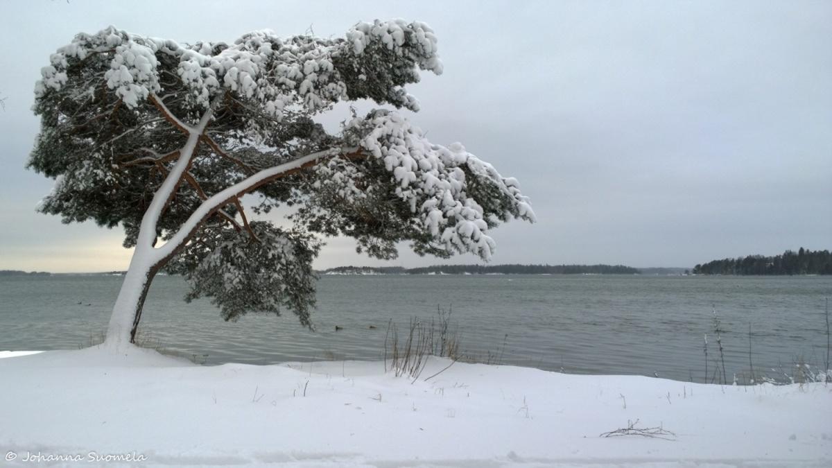 Kaareva manty merenranta lumi