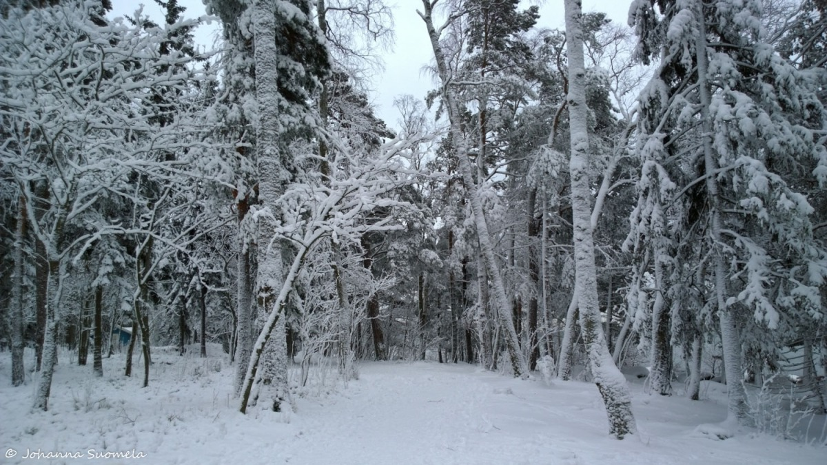 Lumipolku lumipuut