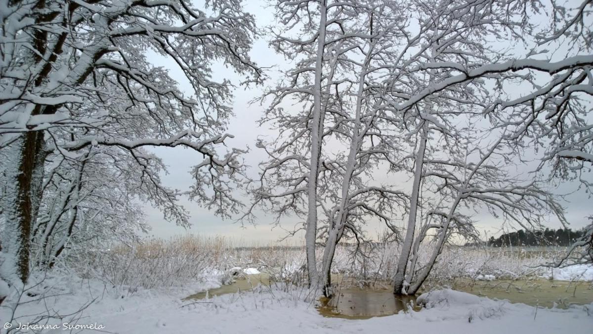 Lumipuut meri