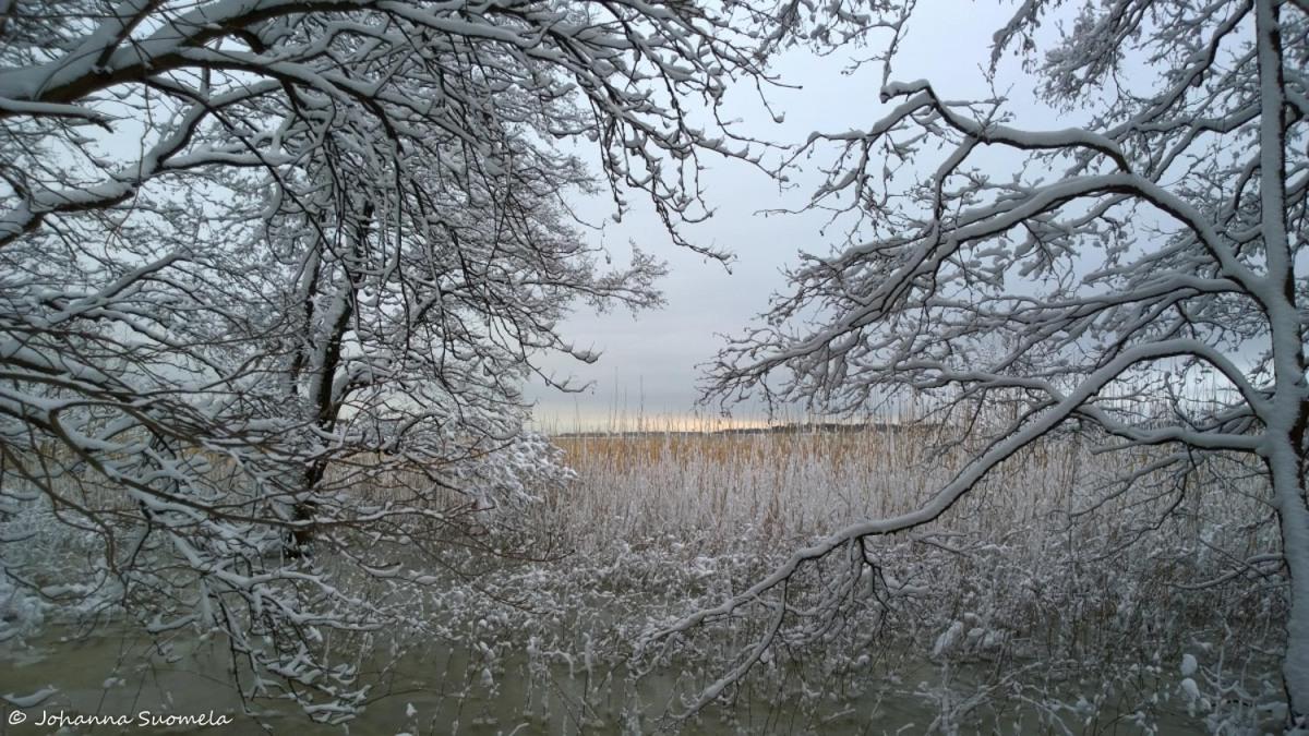Valonkajastus merenranta lumipuut