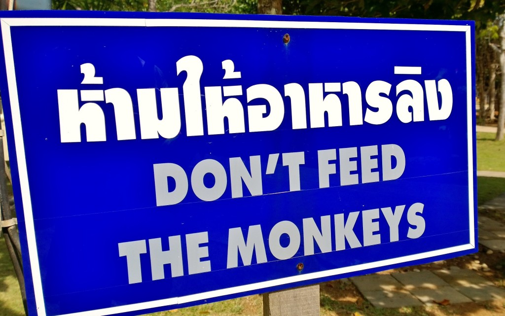 Don´t feed the monkeys