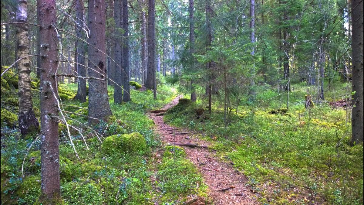 Metsäpolku vihti