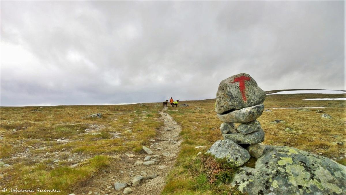 Hardangervidda20150718173345