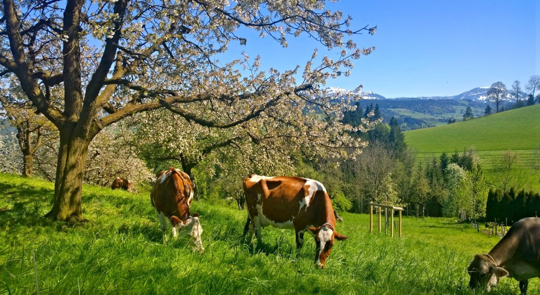 Wolhusen Sveitsi