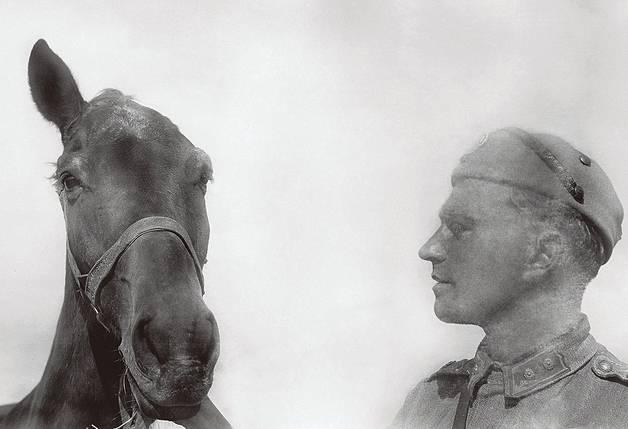 Suomenhevonen sodassa