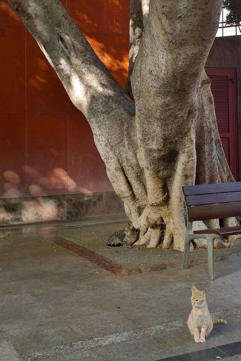 La Gomera San Sebastian 20170109_10_39_39_pro