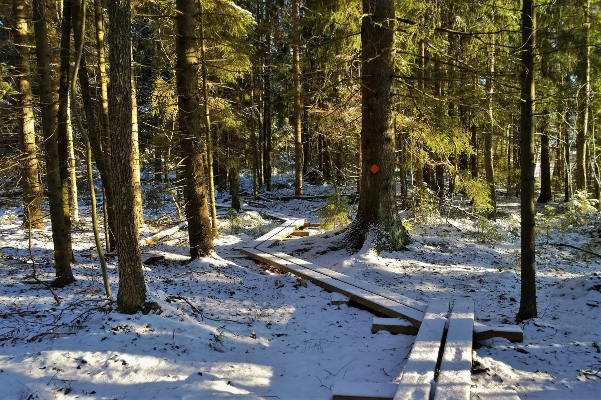 Hyypiön reitti, Liesjärven kansallispuisto
