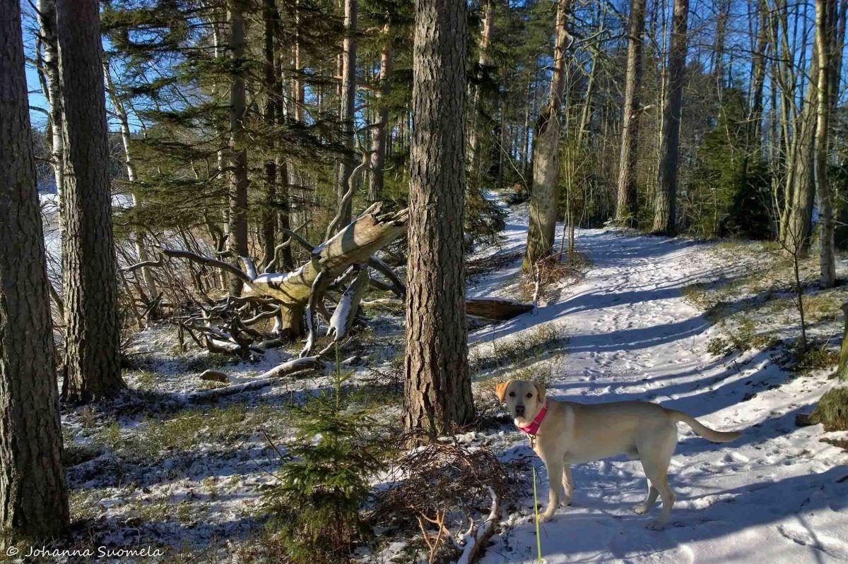 Kyynäränharju, Liesjärven kansallispuisto