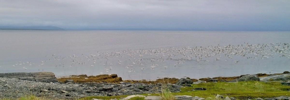 Autolla Jäämerelle_20170714_00_43_36_Pro
