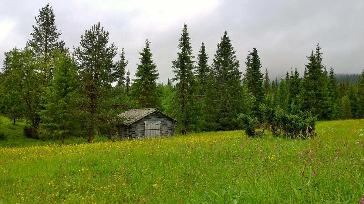 Pallas-Yllästunturin kansallispuisto Hiiripelto