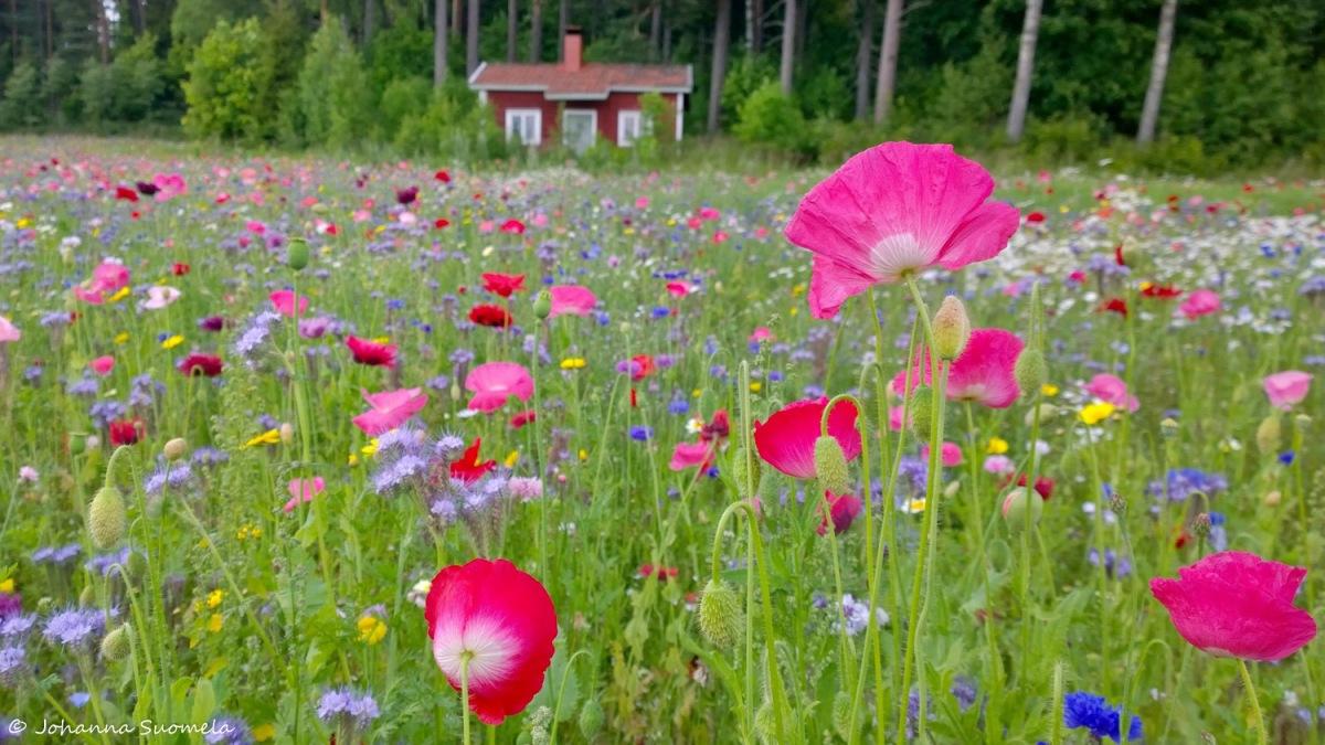 Karkkila Vaskijarvi kukkaniitty