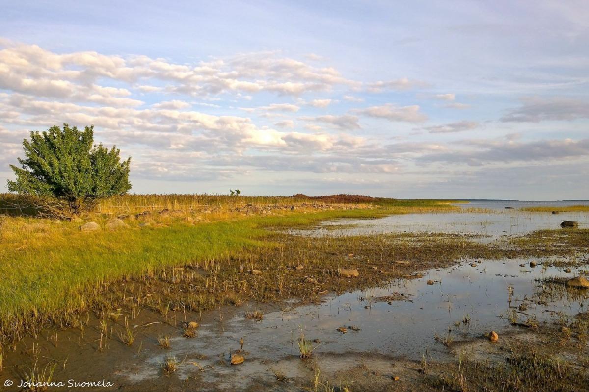 Looden Tammiston rantakaistale