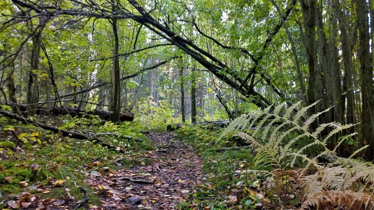 Karkalin luonnonpuisto