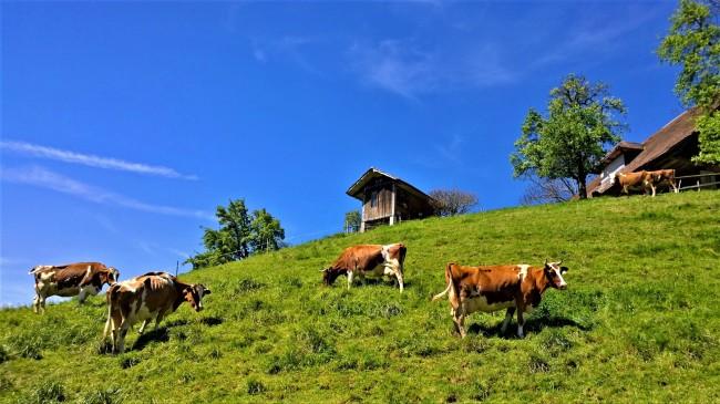 Willisau Sveitsi