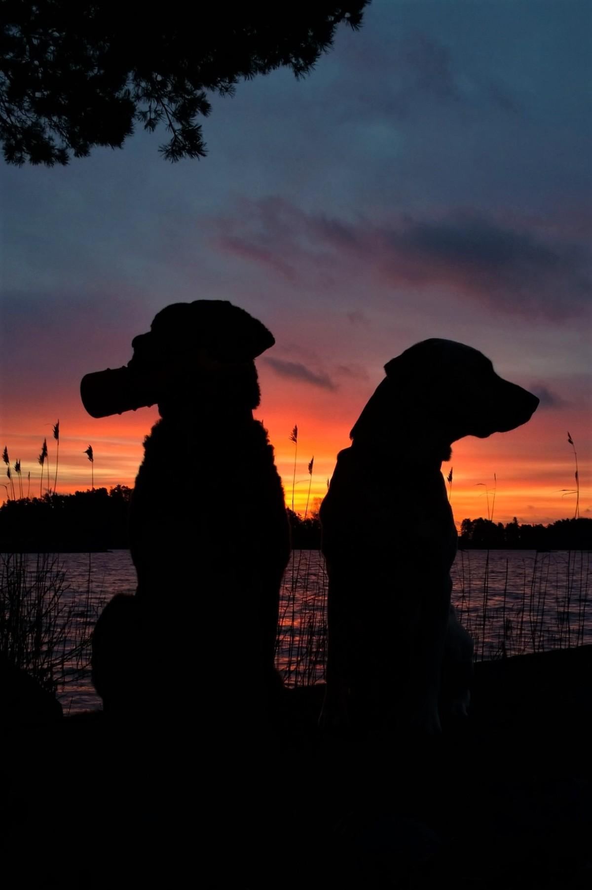 Noutajat auringonnousussa Tammisaaressa
