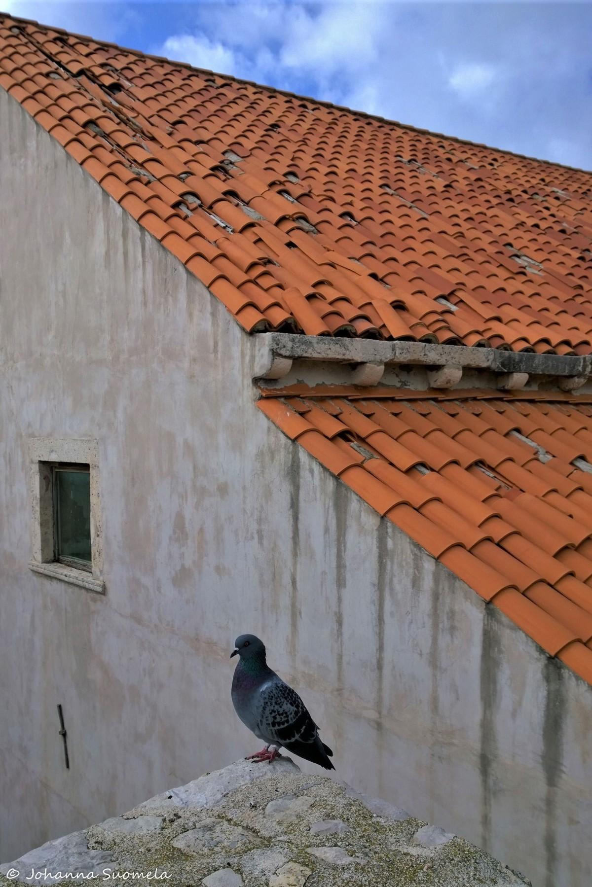 DubrovnikCityWalls20161016_15_00_25