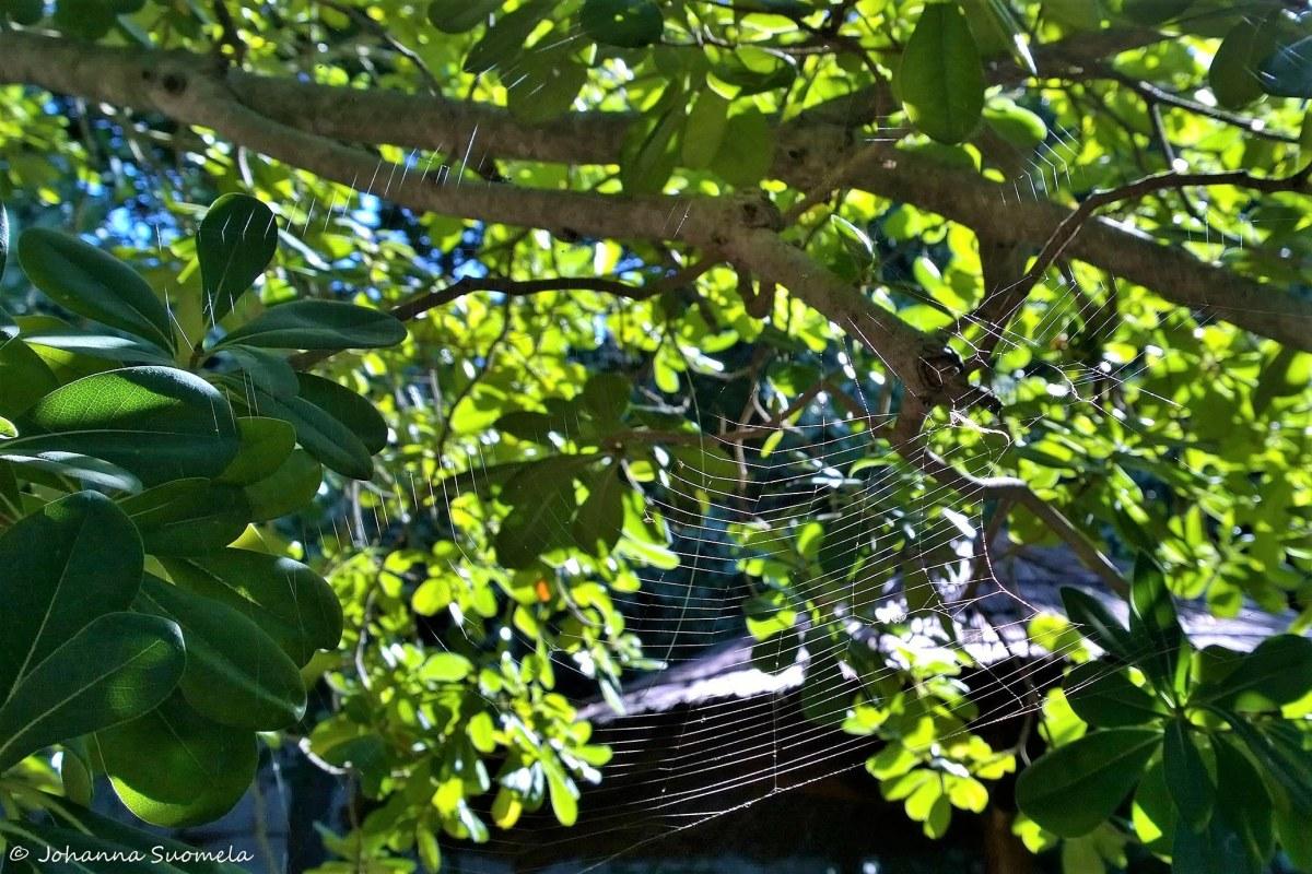 Lokrum Garden of Eden