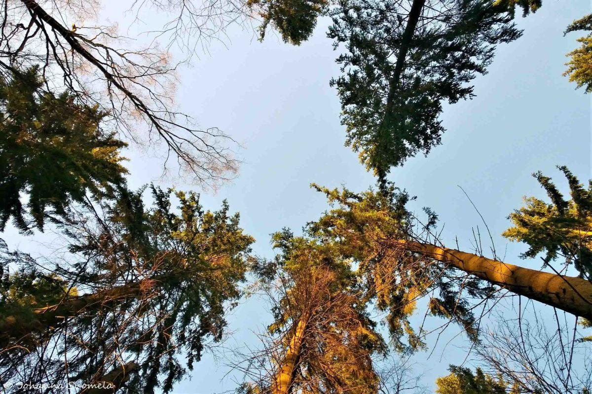 Keskuspuiston puita