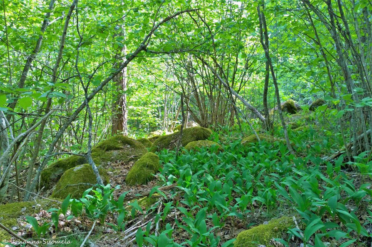 Fiskars Risslan metsäpolku