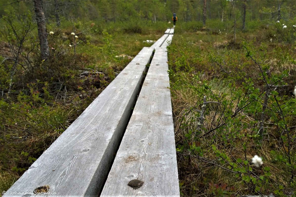 Karhunkierros pitkospuut Hautajarvi