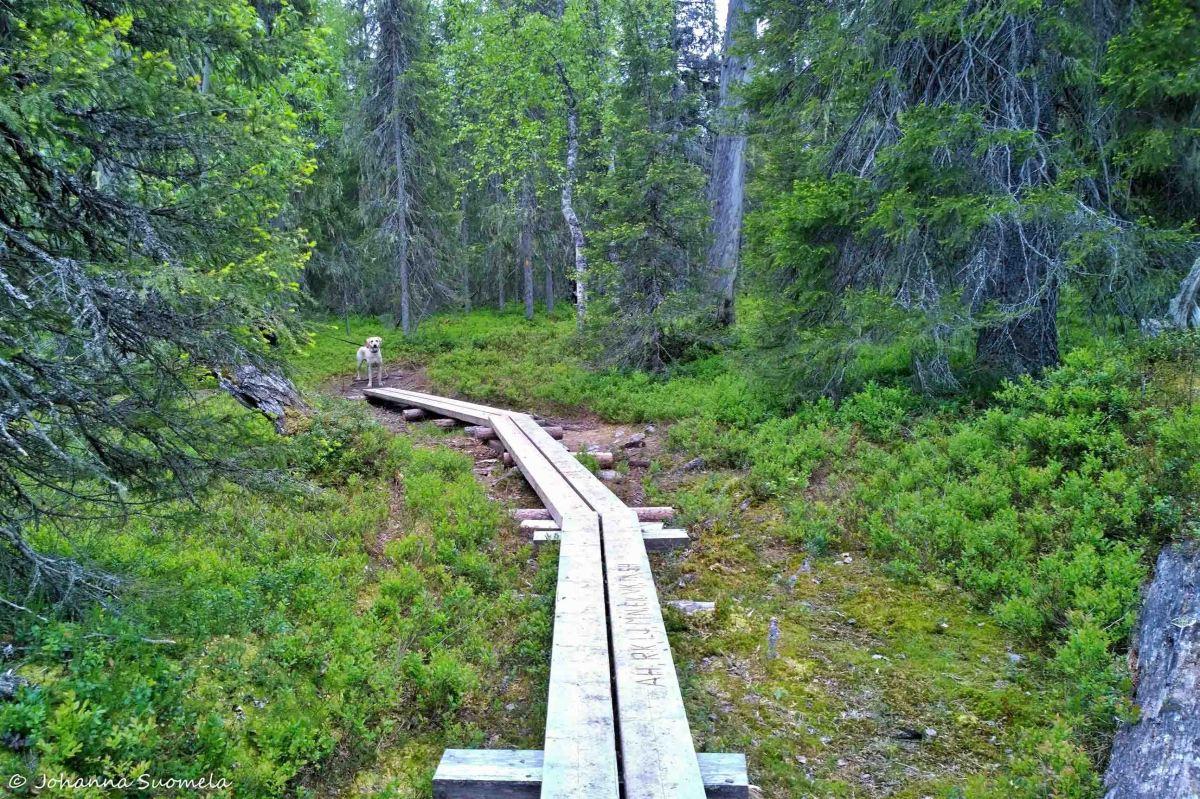 Karhunkierros pitkospuut