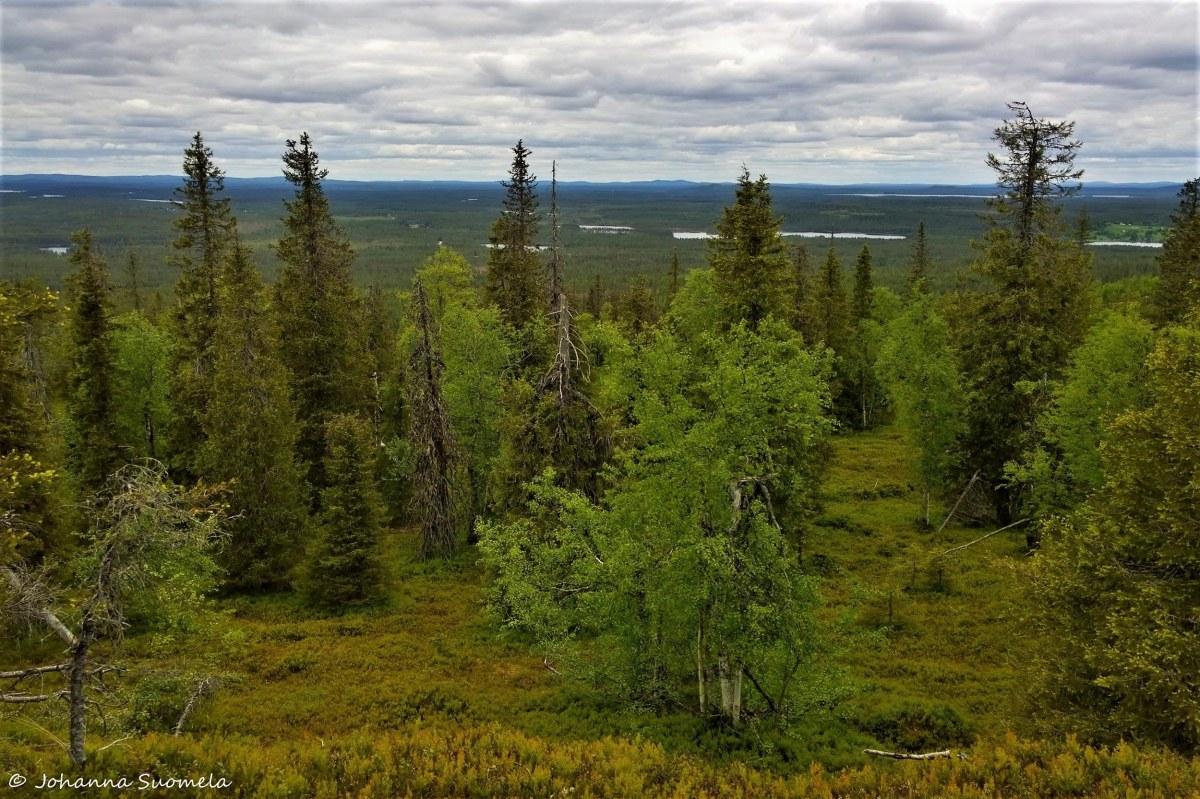 Karhunkierros maisema Ison Kumpuvaaran laelta 20180613141120-2