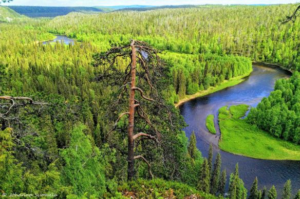 Kuusamon Kauneimmat Vaellusmaisemat 82 Kilometrin Karhunkierros