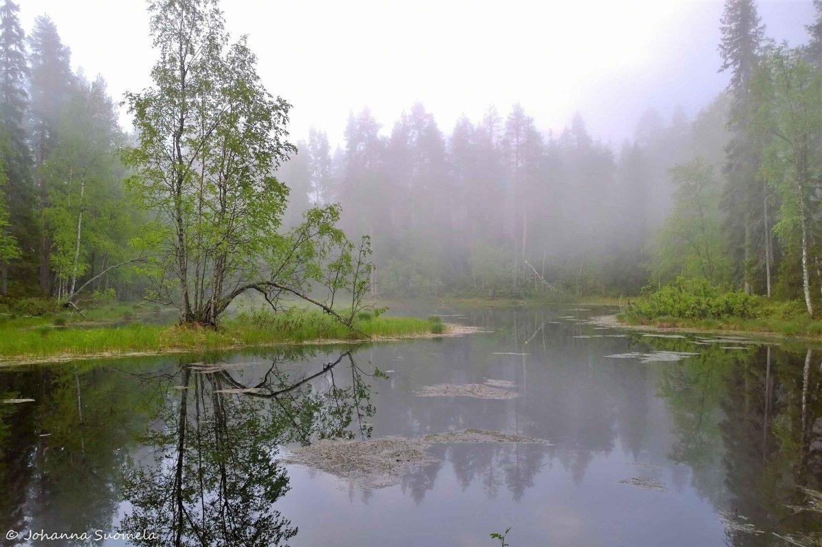 Karhunkierros Taivalkönkään telttapaikka