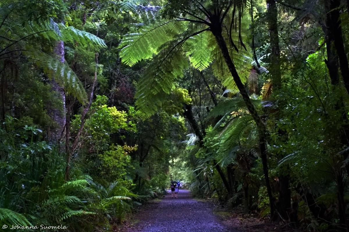 Uusi-Seelanti Waipoua forest
