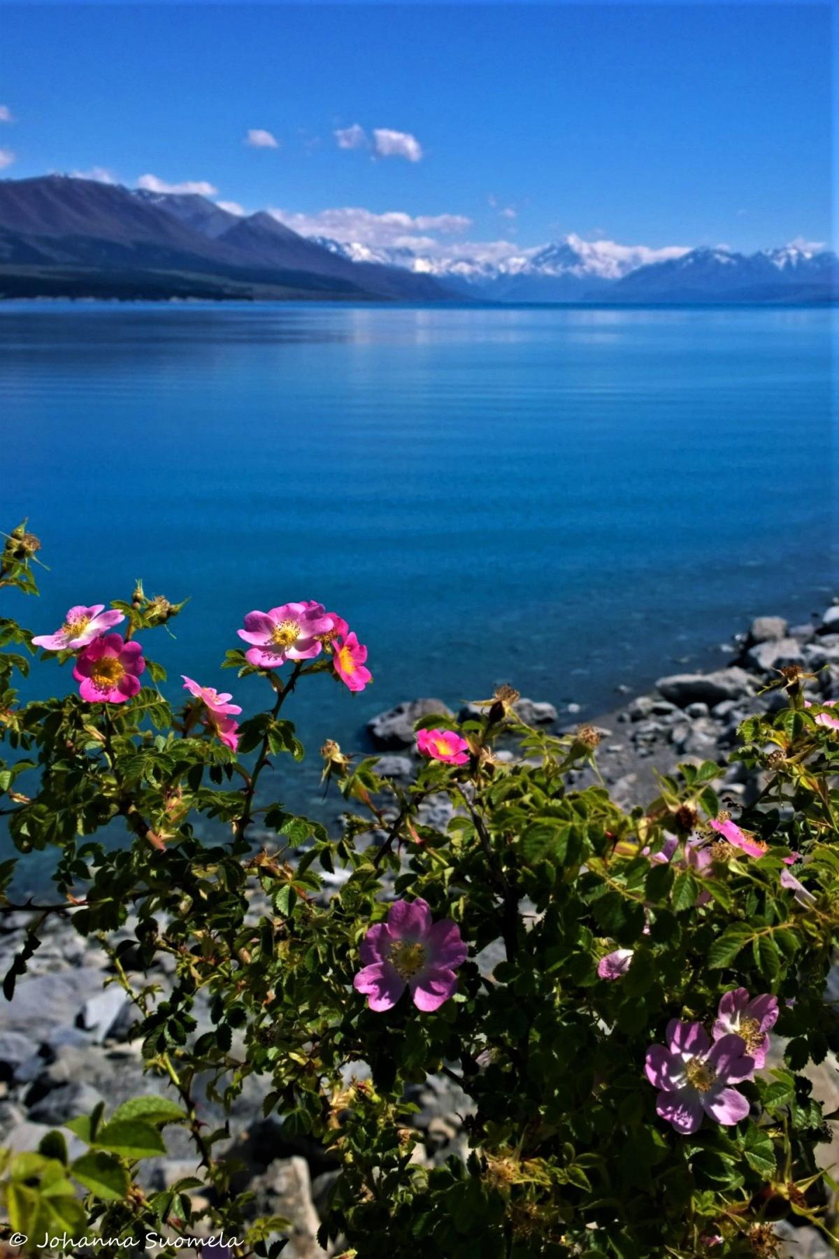 Uusi-Seelanti Lake Pukaki