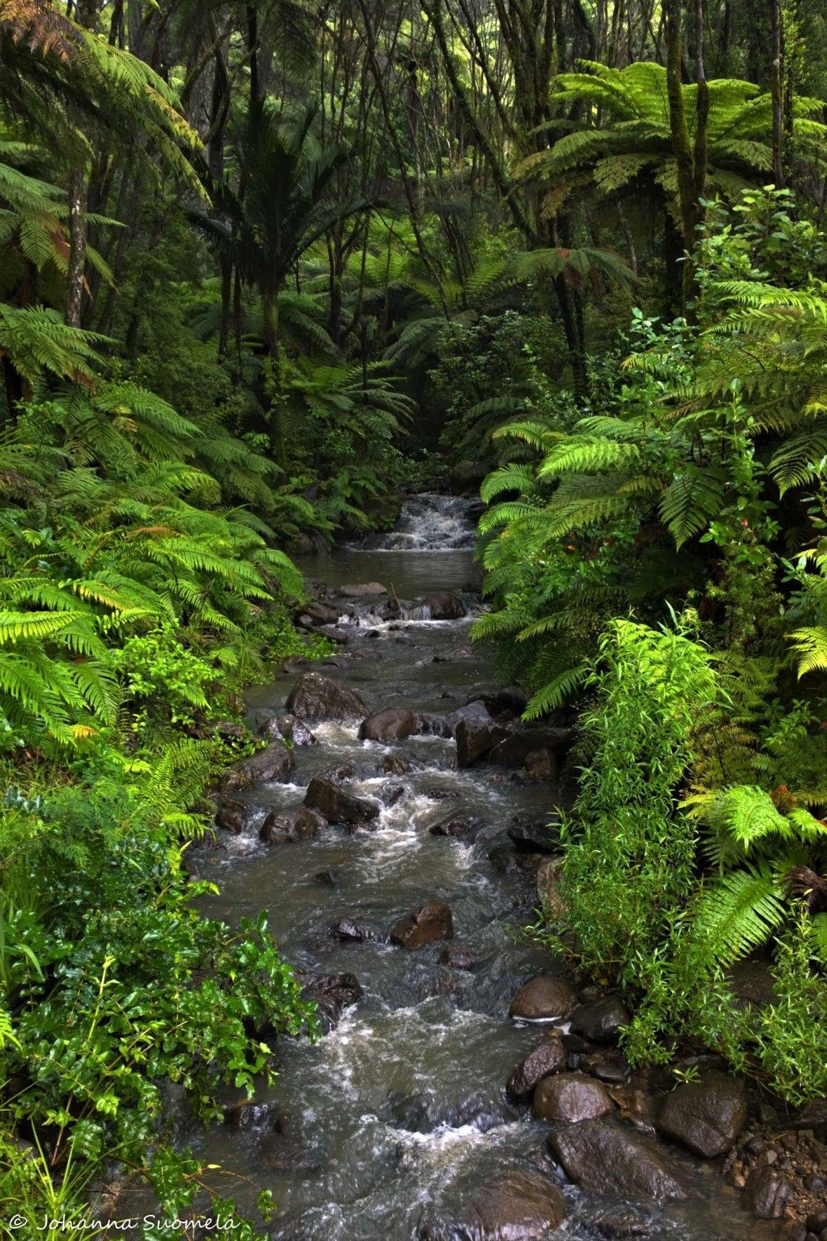 Uusi-Seelanti puro ja saniaisia