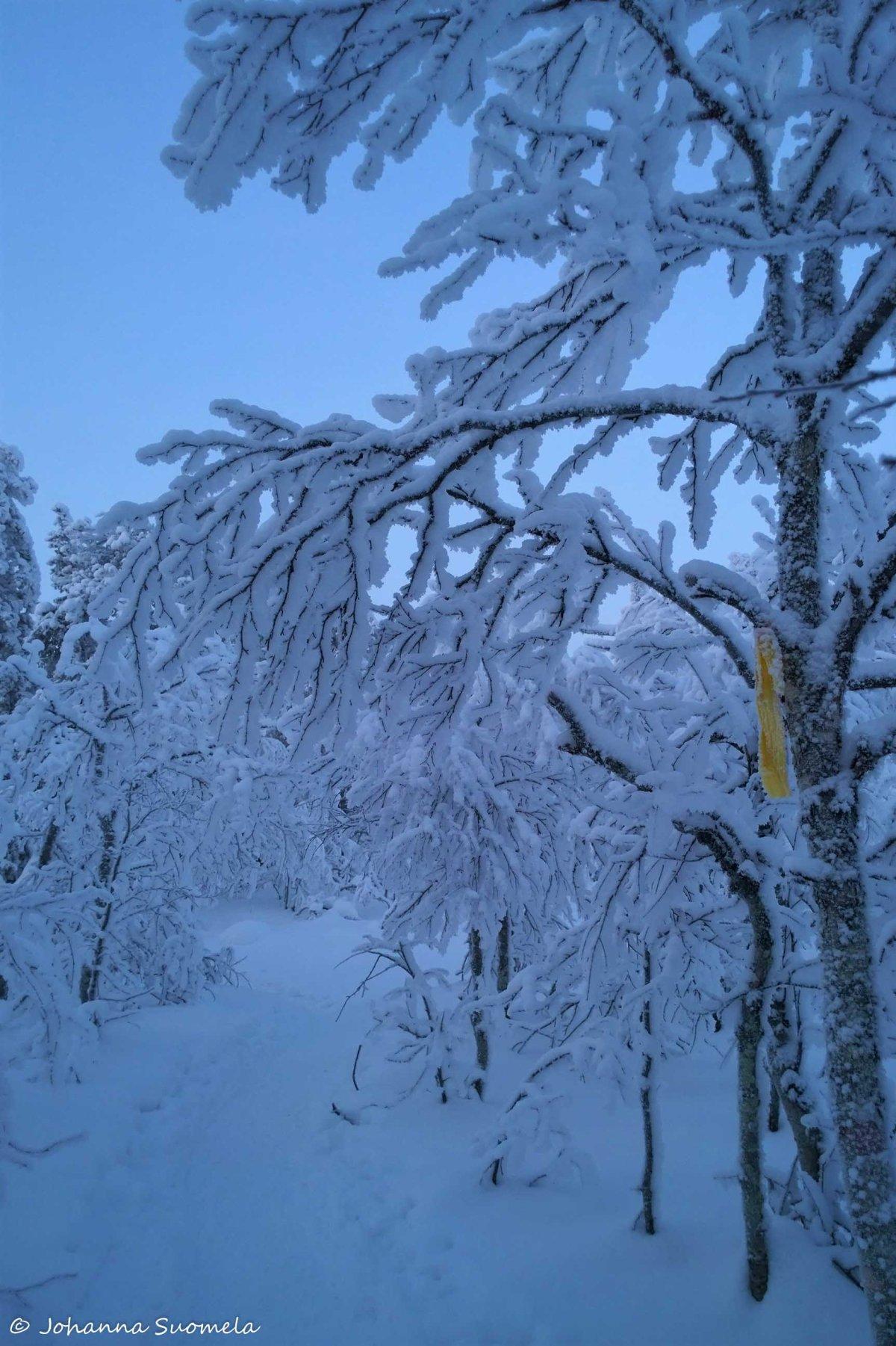 Kätkätunturin lumikenkäreitti