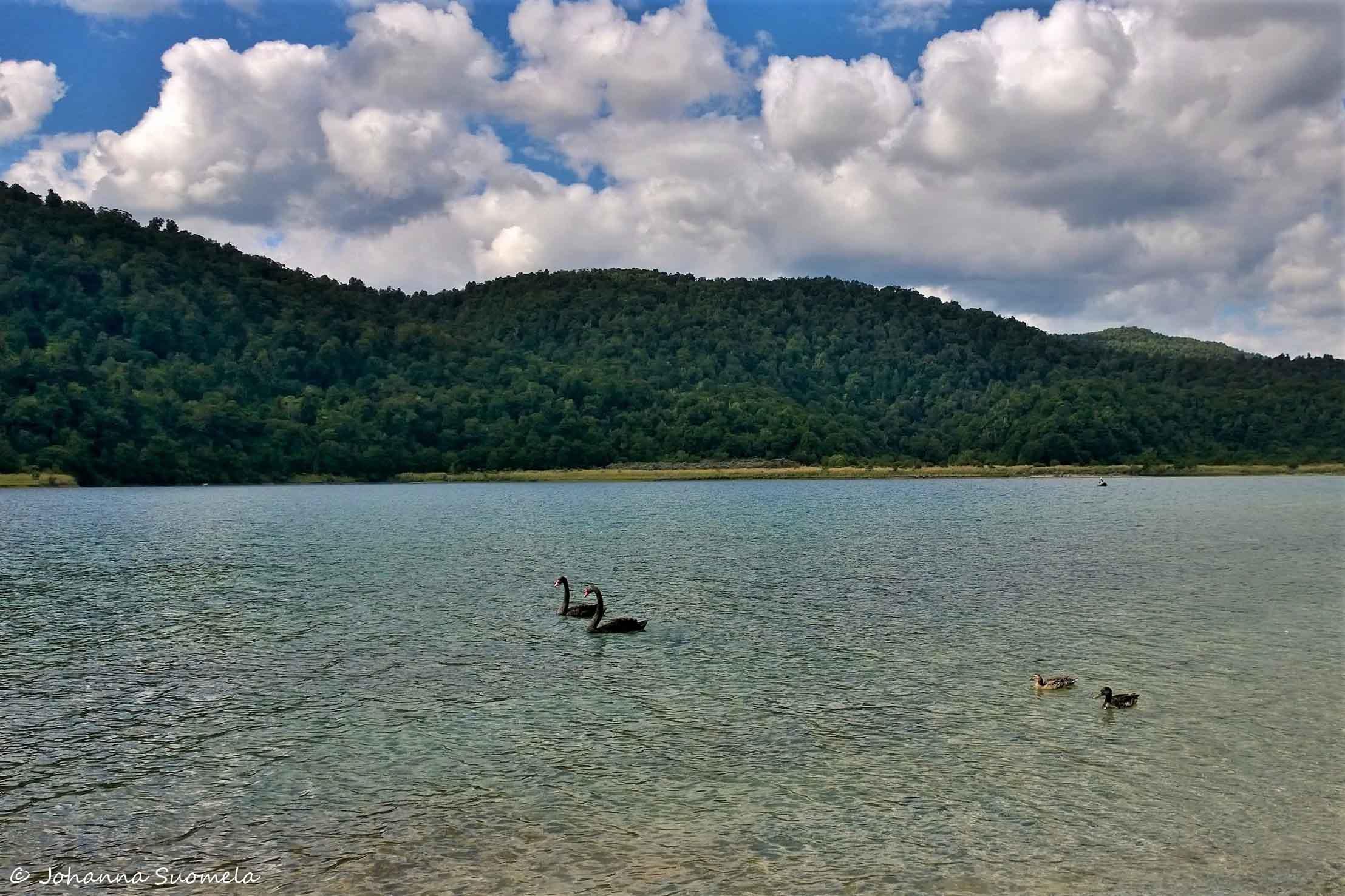 Te Urewera Lake Waikaremoana