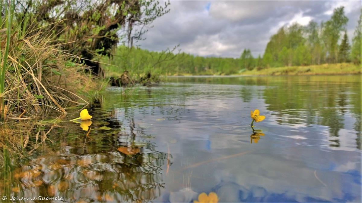 Kemijoki Savukoski