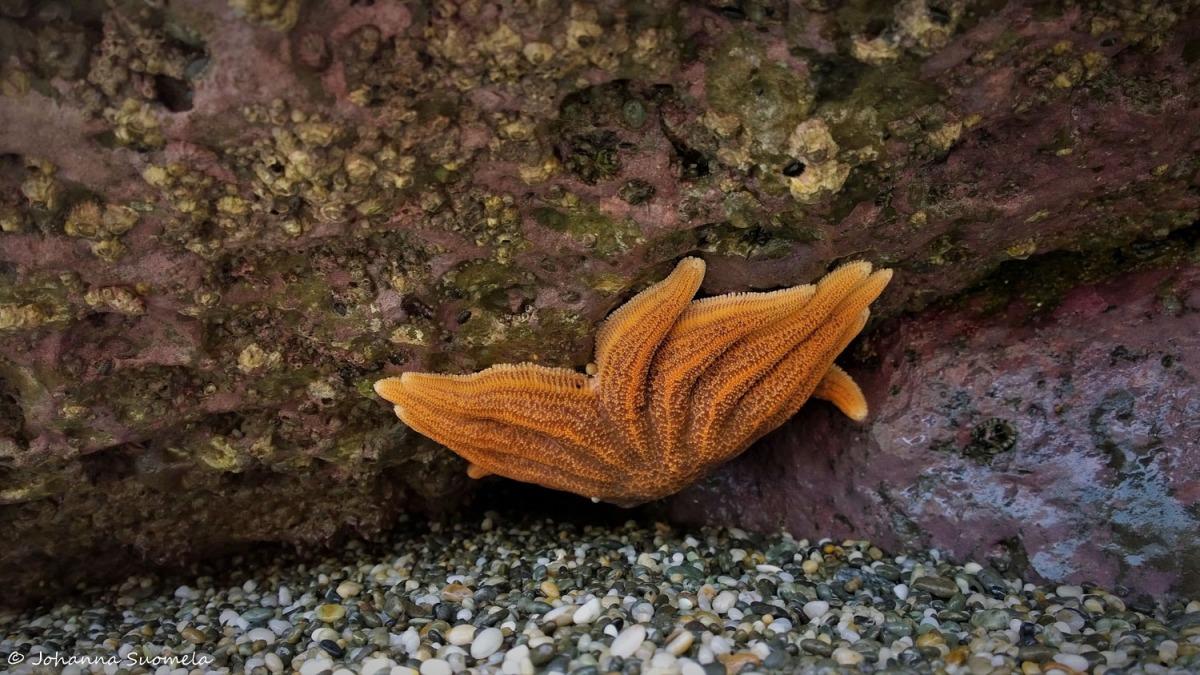 Paparoa Uusi-Seelanti