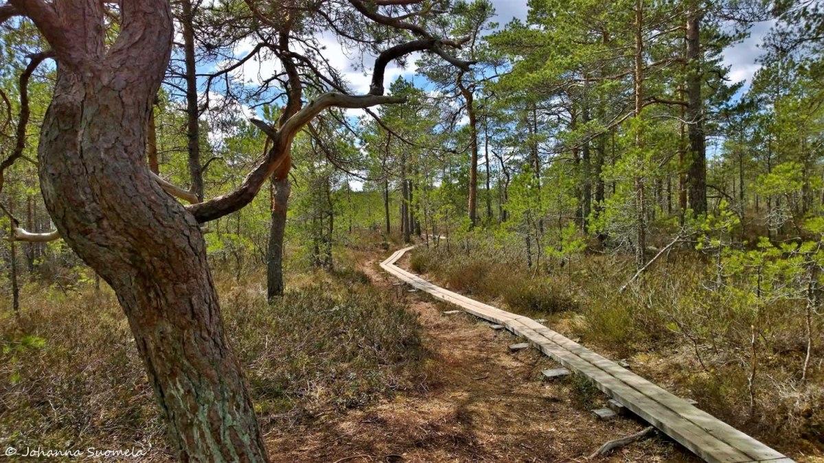 KurjenrahkanKansallispuisto20200515132751