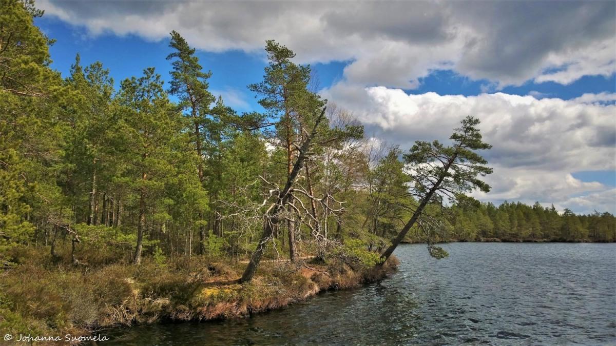 Kurjenrahkan kansallispuisto