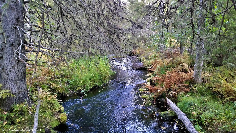 Riisijoki Riisitunturin kansallispuisto